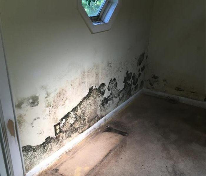 Water and mold damage along bottom 3ft of wall