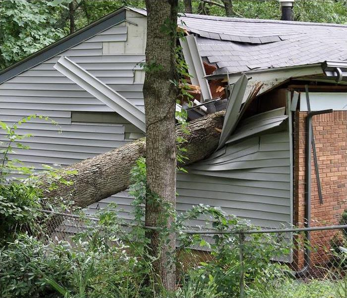 Tree fallen on roof of house after a storm