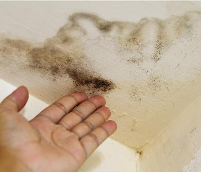 Hand pointing to mold growth on ceiling